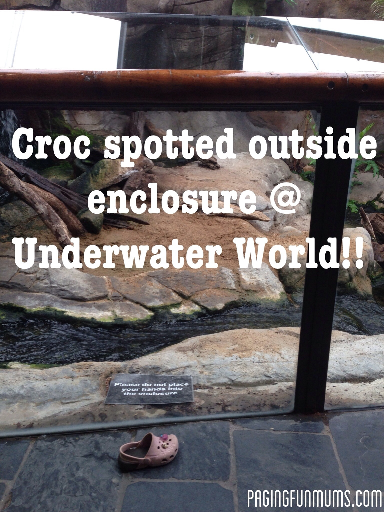 Croc spotted outside enclosure!