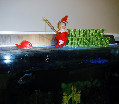 Elf Buddy doing a spot of Fishing in their home Fish tank!