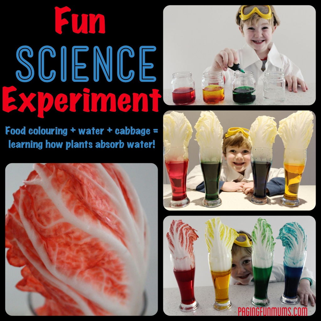 How plants absorb water science experiment!