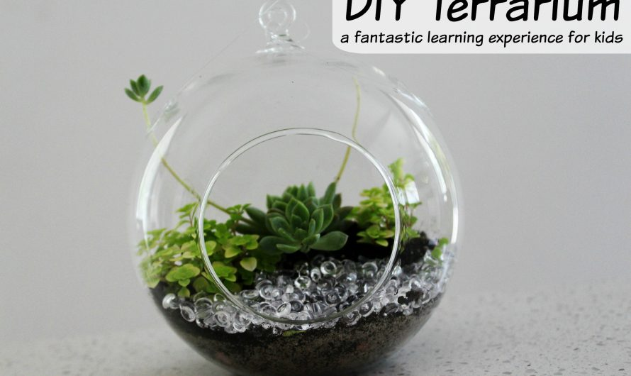 How to make a Terrarium – a fun and educational activity for little gardeners