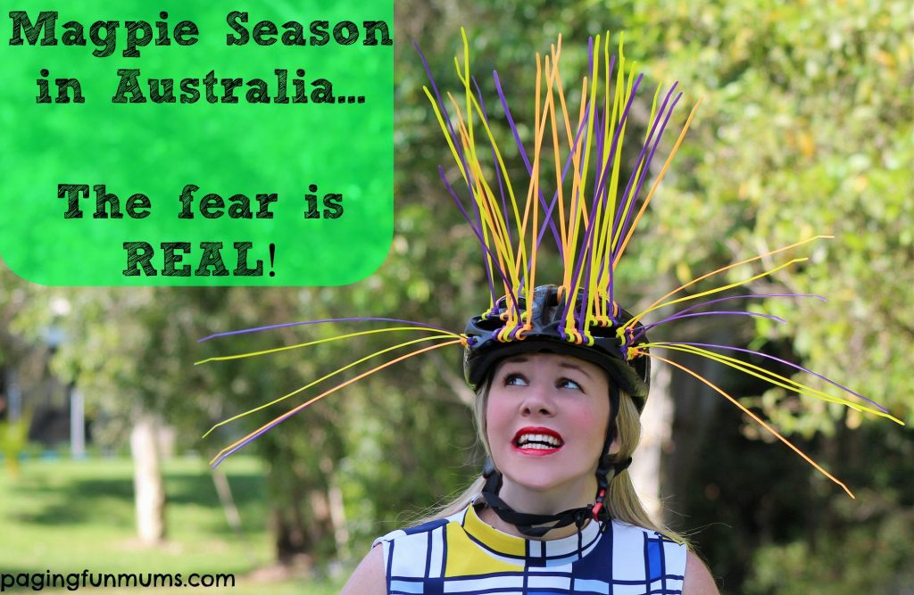 Magpie season in Australia - the fear is REAL
