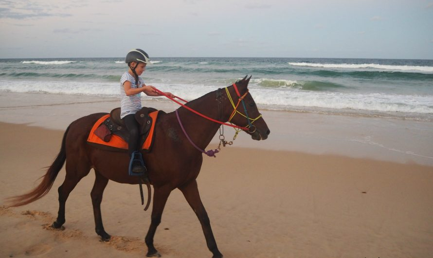 Rainbow Beach Horse Rides – a family friendly adventure!